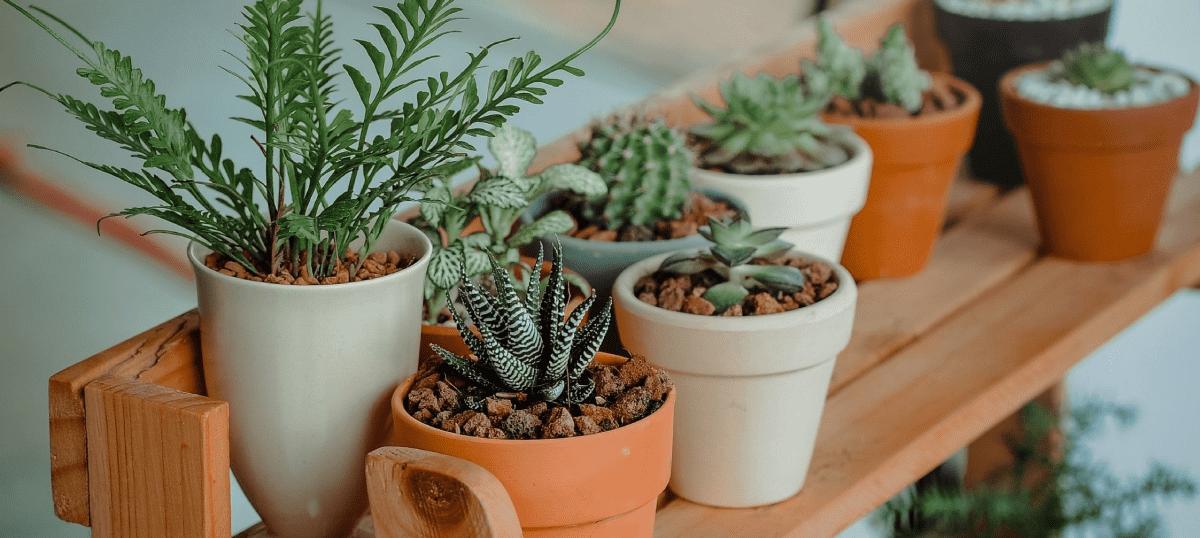 6 нужных товаров для комнатных растений